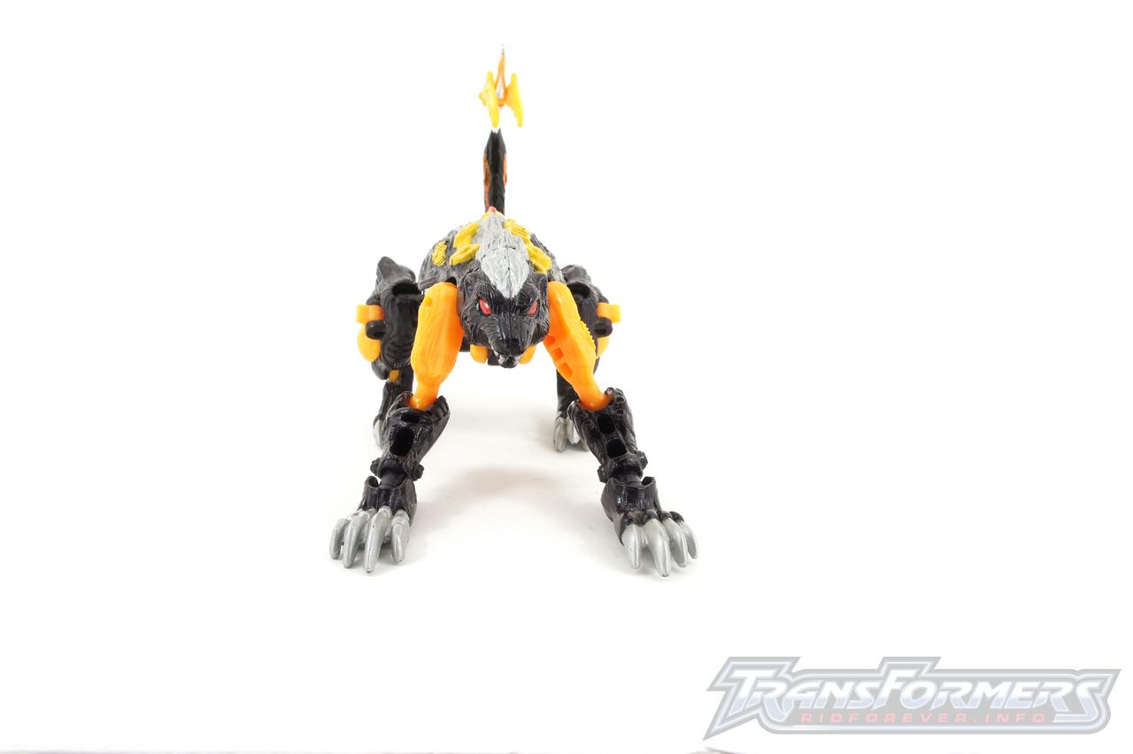 Gas Skunk-029