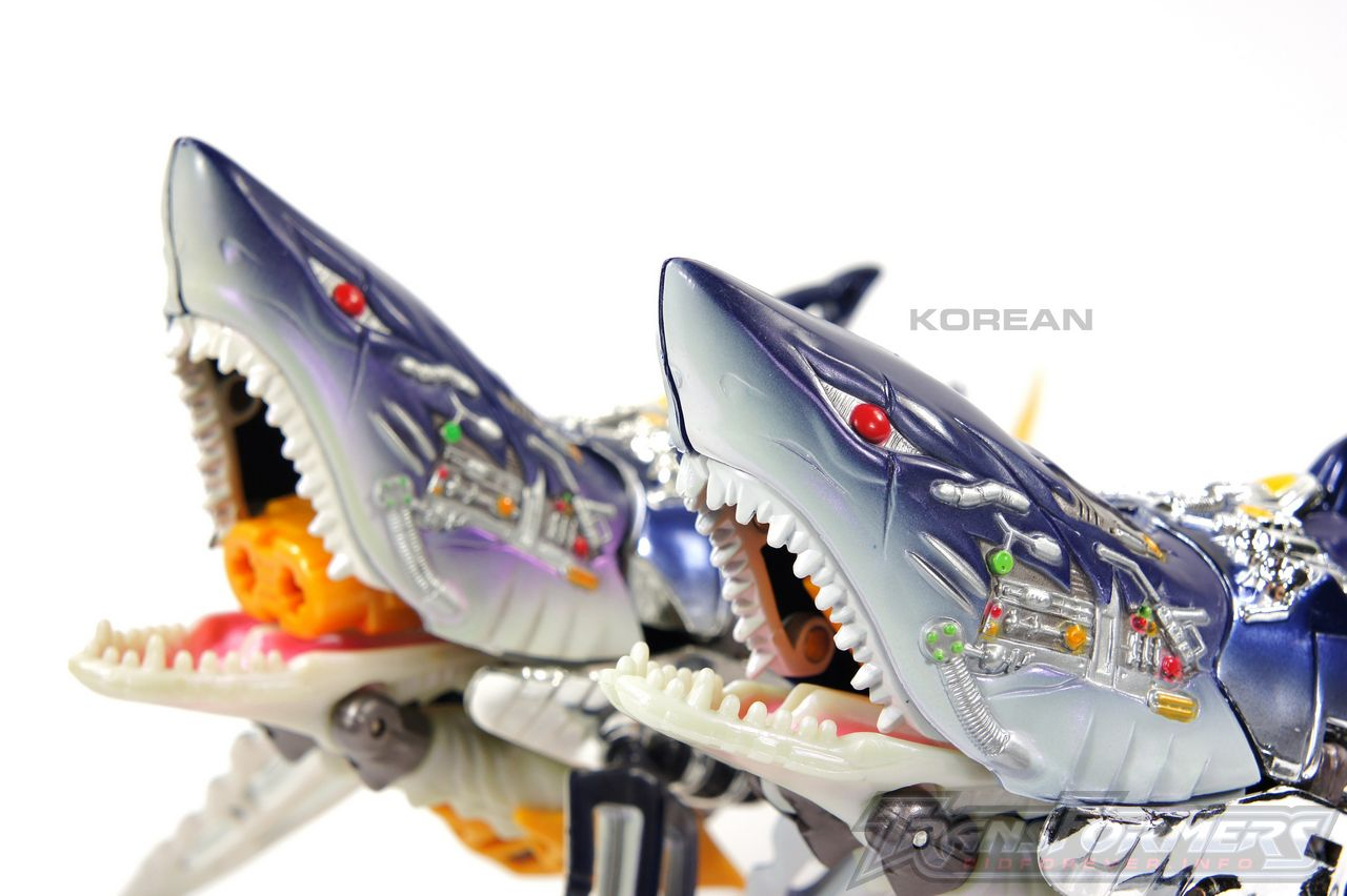 Korean Gelshark 13